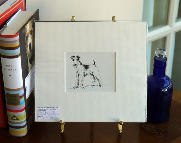 Wire haired Fox Terrier standing - Ter O3 - 1960's print by Bridget Olerenshaw